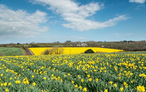 Who'll pick all the flowers? Cornwall's Brexit labour shortage