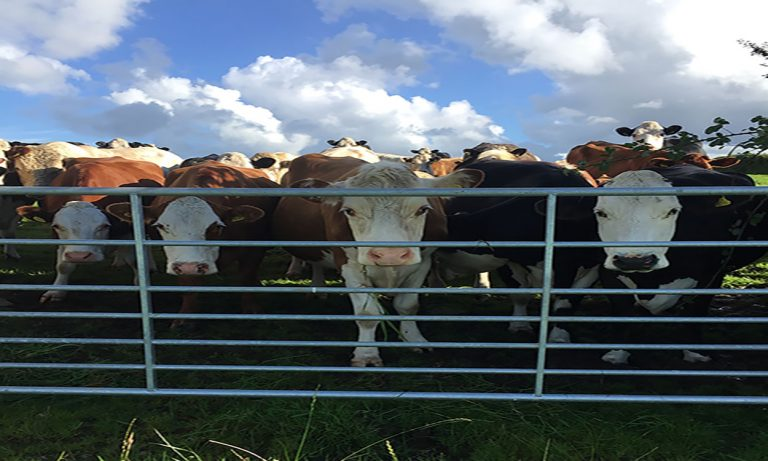 How do Cornwall's young farmers feel about Brexit?
