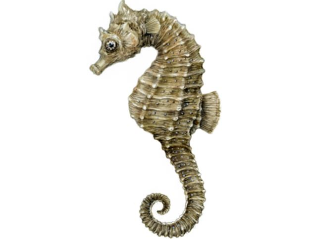 Rare seahorse found in Falmouth waters