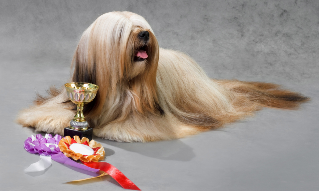 Crufts: for the love of dogs