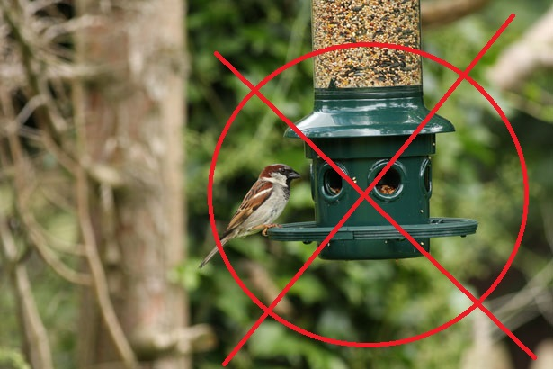 Vegans Banning Bird Feeders; Whatever Next?