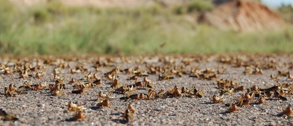 Locust infestation -The worst crisis in 70 years?