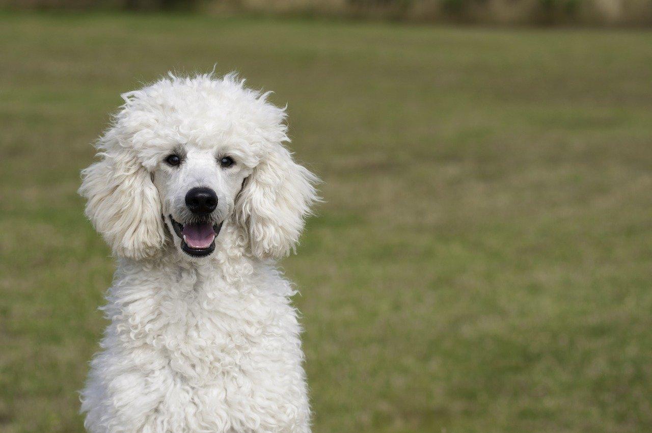 Dog eat dog world after Cabinet reshuffle