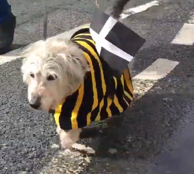 Know the reason why: St. Piran's Day celebration in Truro